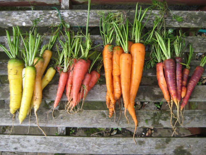 rooty winter feast