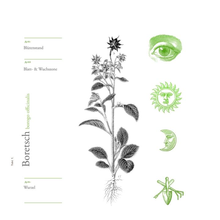 CarlottaCramerKlett_Wild&Root_Illustration2